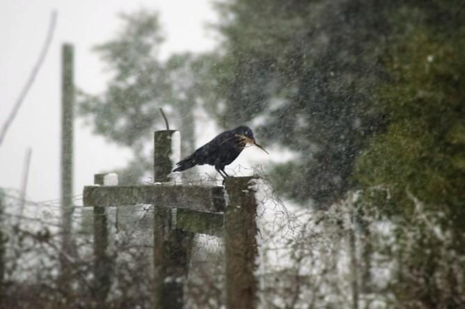 nestingraven - Copy